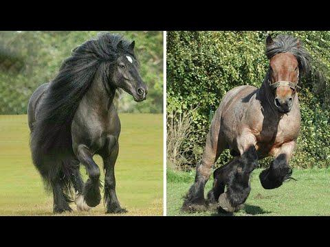 Funniest and Cute Horse Videos Compilation cute moment of the horses - Cute Baby Horses #4