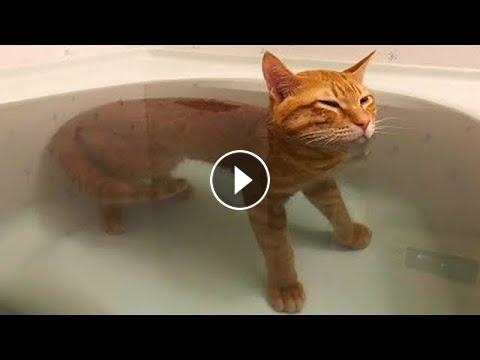 Chat Mignon Chat Drole Video De Chat A Mourir De Rire 51