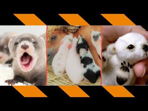 TRY NOT TO LAUGH funny dogs and cats reaction - animals 2021 - funny animals