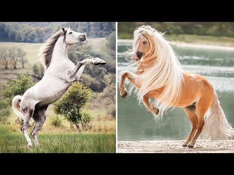 Cute And funny horse Videos Compilation cute moment of the horses - Cutest Horse #05