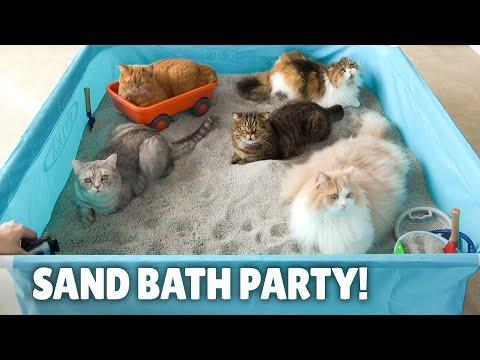 My Cats Enjoyed a Humongous Sand Bath! | Kittisaurus