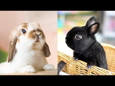 Animals SOO Cute! Cute baby animals Videos Compilation cutest moment - Cute animal planet #43