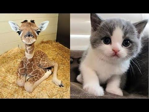 Cute Baby Animals Videos Compilation ???? Cute Moment Of The Animals ????Pets Garden #1