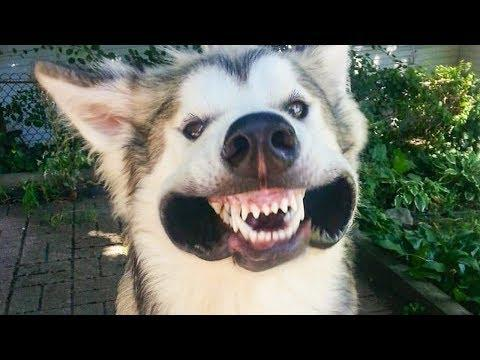 ???? Funniest Cute ????Cats And ???? Dogs  - Try Not To Laugh - Funny Pet Animals' Life ????
