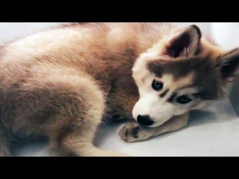 ???? AWW Animals SOO Cute! ???? Cute Baby Animals Videos Compilation [Funny Pets]