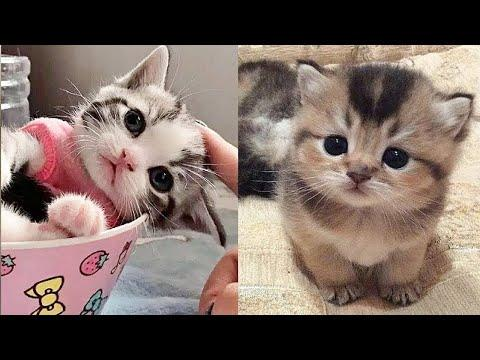 Cute Pets And Funny Animals Compilation #128???? Pets Garden