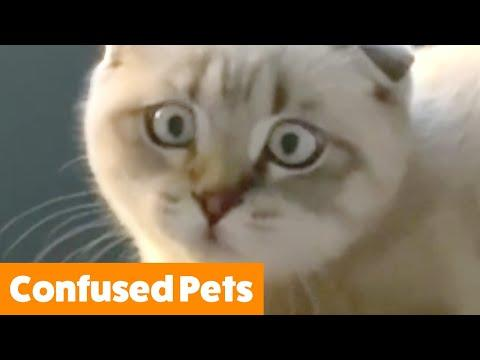 Funniest Confused Pets | Funny Pet Videos